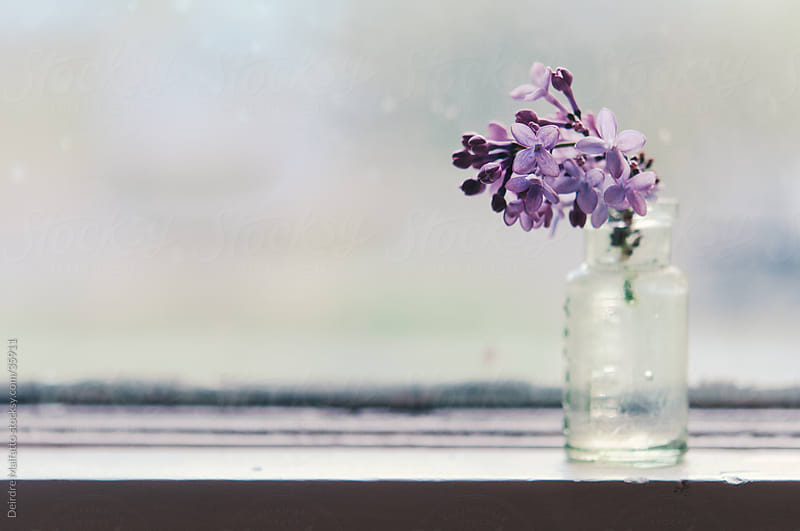 lilac flower in bottle on window sill by Deirdre Malfatto for Stocksy United