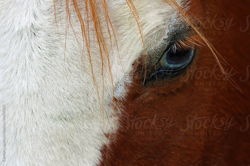 Close up of a horse's pretty blue eye by Carolyn Lagattuta for Stocksy United