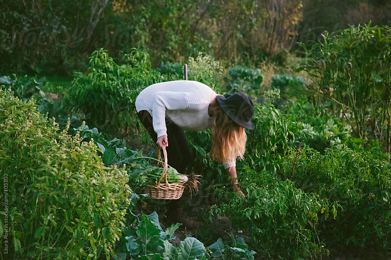 Young Woman Picking Vegetables In A Garden by Laura Austin for Stocksy United