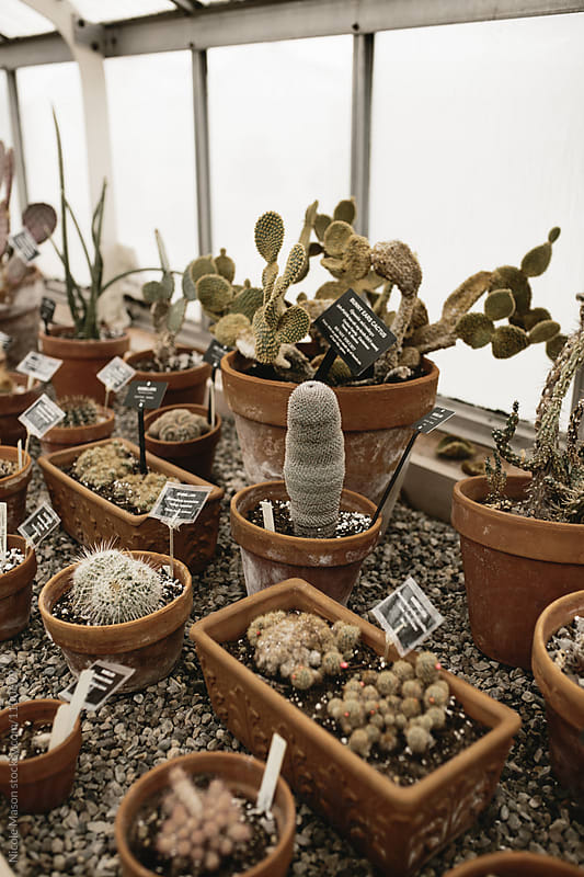 cacti and succulent plant garden in greenhouse by Nicole Mason for Stocksy United