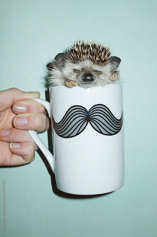 Hedgehog in a mug by Javier Marquez for Stocksy United