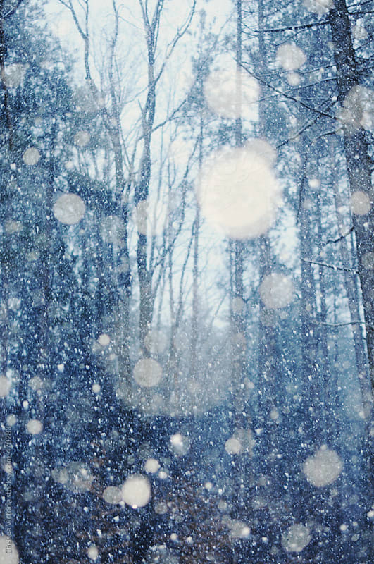 Snow and trees by Chelsea Victoria for Stocksy United