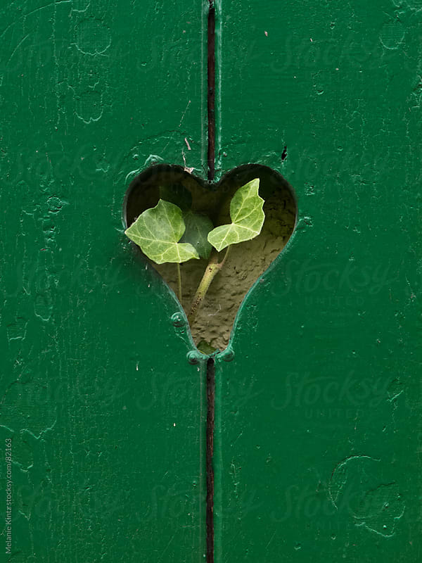 heartshaped hole in a green window shutter with ivy leaves growing through it by Melanie Kintz for Stocksy United