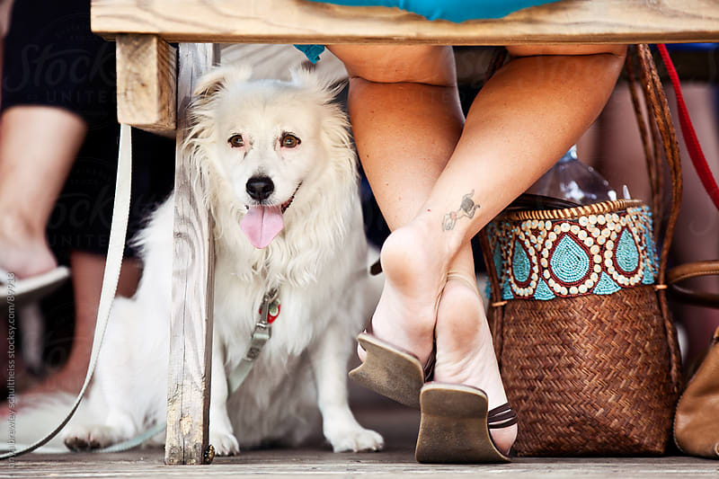 White dog sitting comfortably at its owner's feet by anya brewley schultheiss for Stocksy United