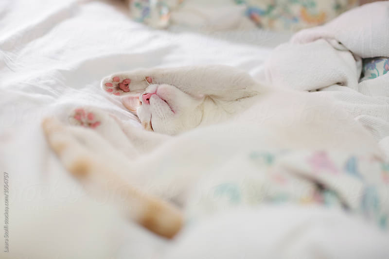 Blissful cat enjoys a nap on unmade bed by Laura Stolfi for Stocksy United