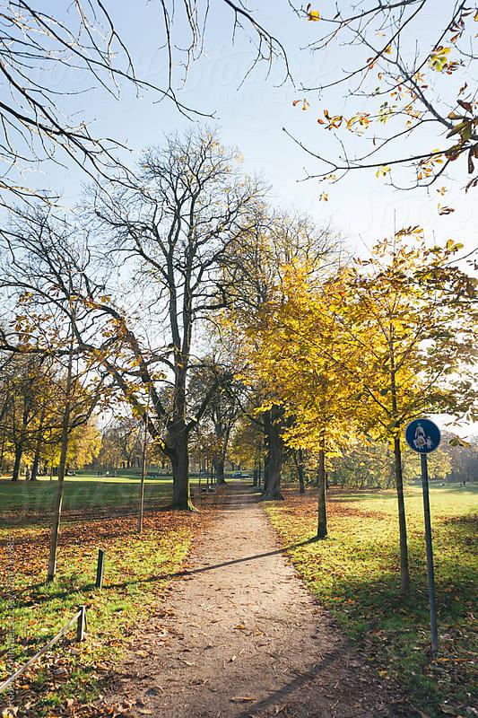 Sun shining in autumn park by Robert Kohlhuber for Stocksy United