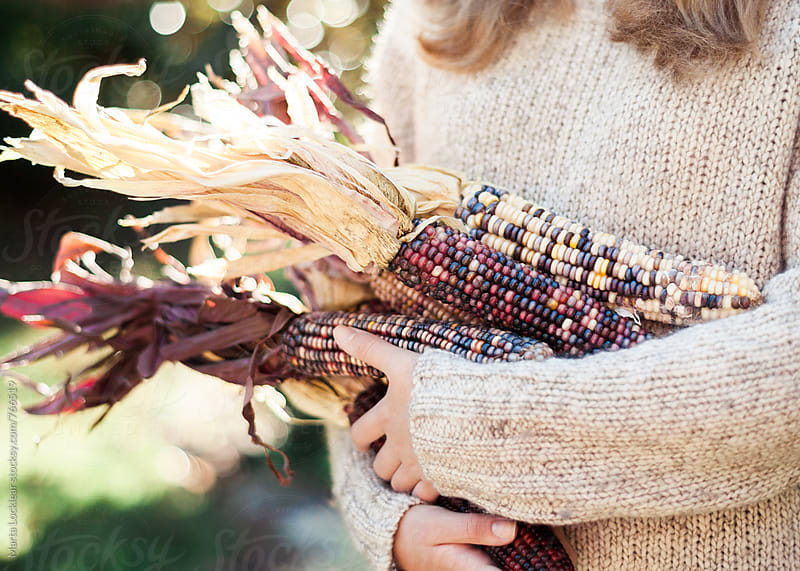 Gathering Indian Corn by Marta Locklear for Stocksy United
