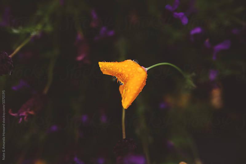 Flowers by Nate & Amanda Howard for Stocksy United