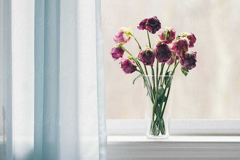 Pink flowers in window with blue curtain by Kerry Murphy for Stocksy United