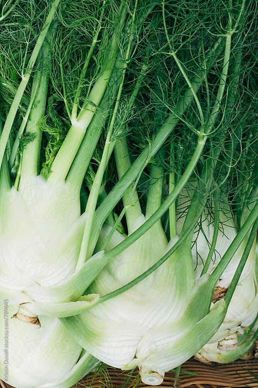Fresh whole stalks of fennel by Kristin Duvall for Stocksy United