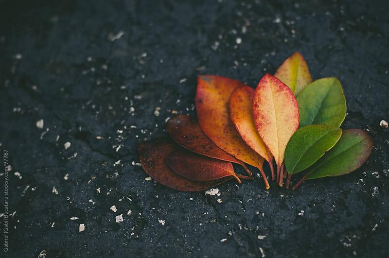 fall leaf palette by Gabriel (Gabi) Bucataru for Stocksy United
