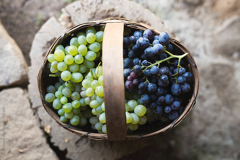 Green and dark grape in basket by Pixel Stories for Stocksy United