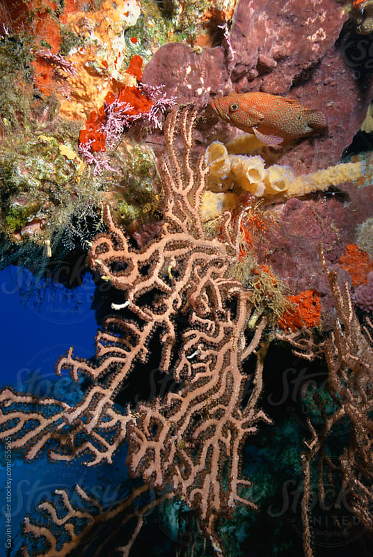 Colourful Coral reef, Cozumel, Caribbean Sea, Mexico by Gavin Hellier for Stocksy United