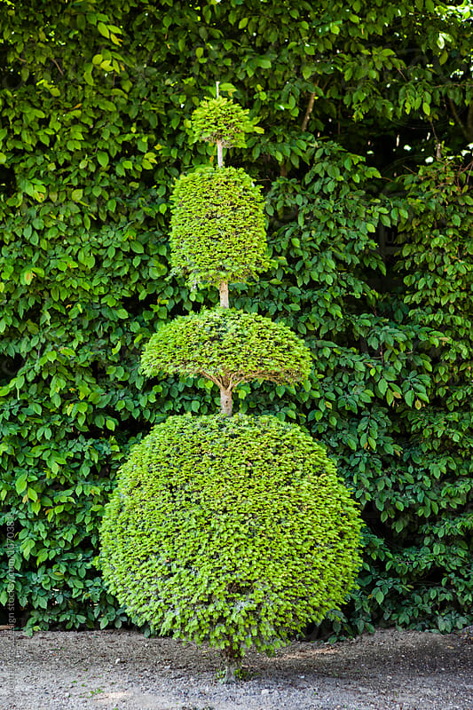 Topiary tree by Mental Art + Design for Stocksy United