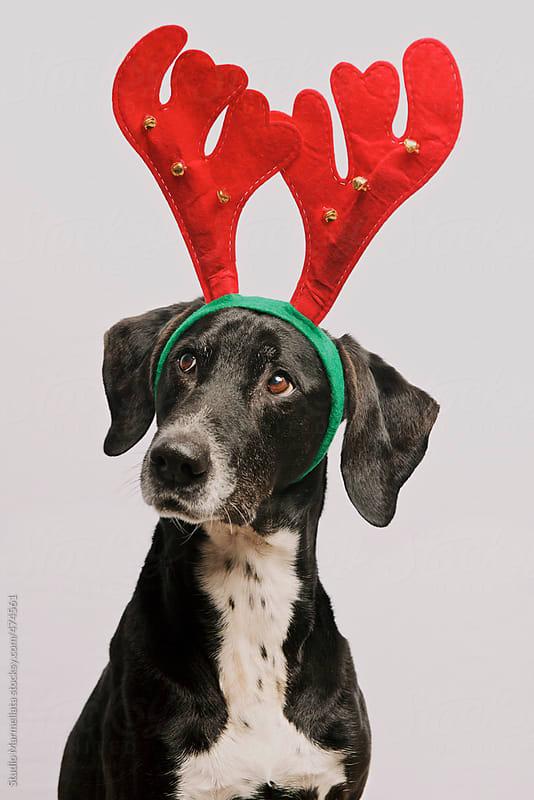 Merry Christmas dog by Juri Pozzi for Stocksy United