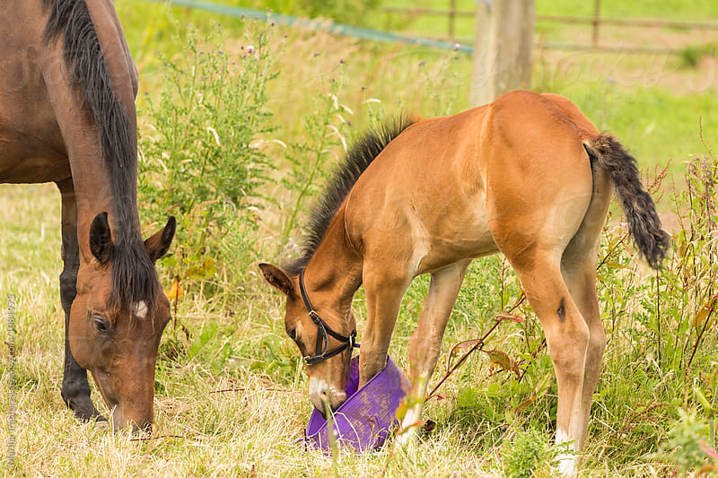 Mare and her foal eating in the countryside by Marilar Irastorza for Stocksy United