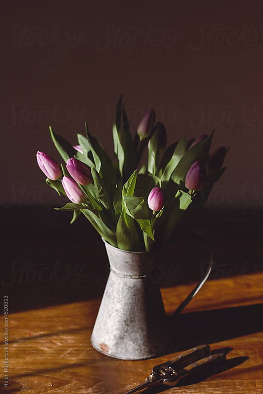 Lilac tulips in a galvanised jug on a sunlit table by Helen Rushbrook for Stocksy United