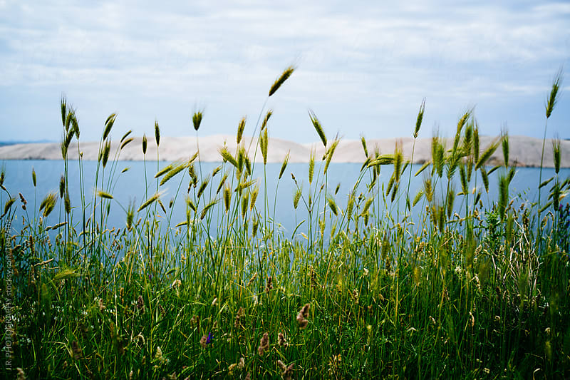 Green wheat field at the coast by J.R. PHOTOGRAPHY for Stocksy United
