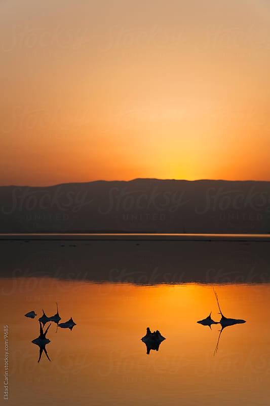 Dead Sea Sunrise - Salt Stems at Dawn by Eldad Carin for Stocksy United