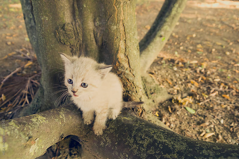 Kitten on the Tree by HEX. for Stocksy United