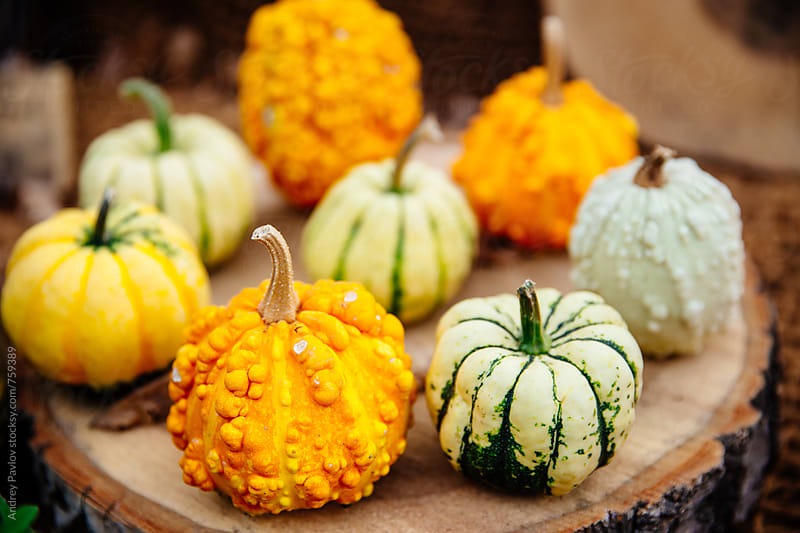 Colorful pumpkins by Andrey Pavlov for Stocksy United