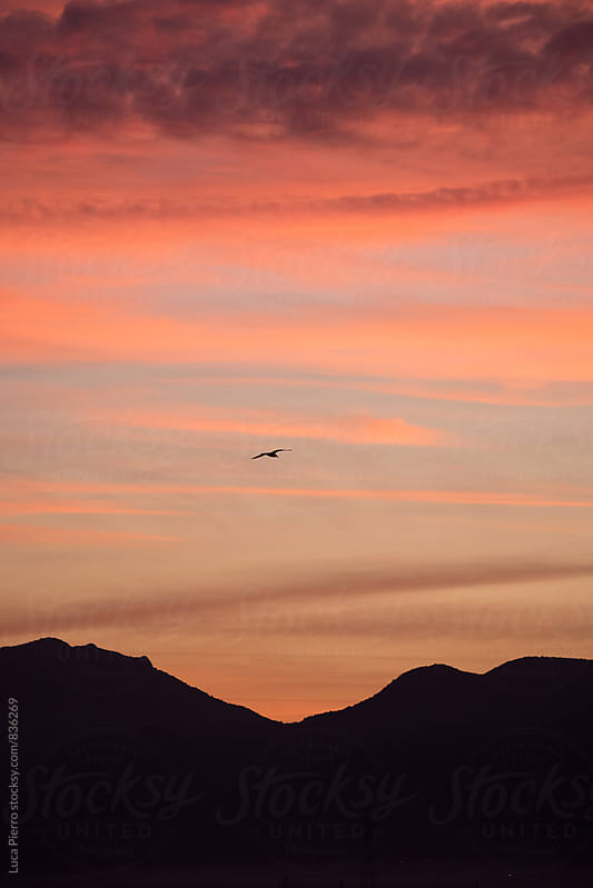 Seagull on sunset background by Luca Pierro for Stocksy United