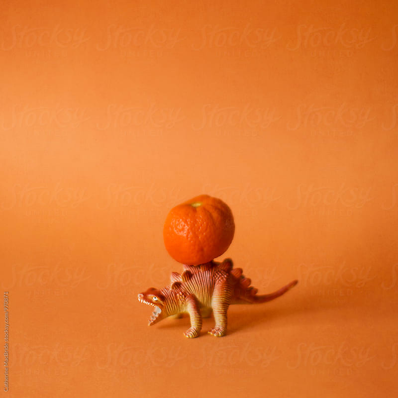 The orange bearer... by Catherine MacBride for Stocksy United