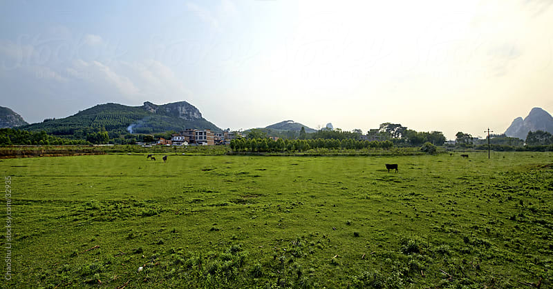 Natural green countryside scenery by ChaoShu Li for Stocksy United
