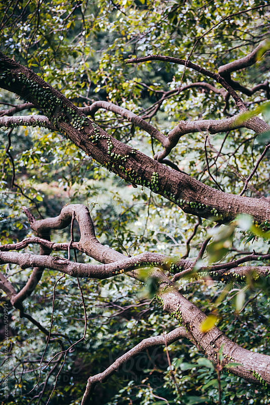 Branches Of Tree by minamoto images for Stocksy United