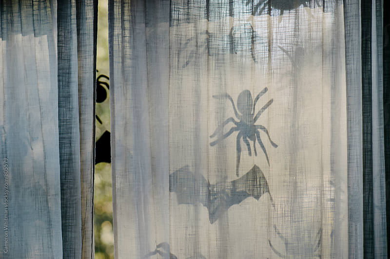 Creepy Crawly Halloween Decorations by Cameron Whitman for Stocksy United