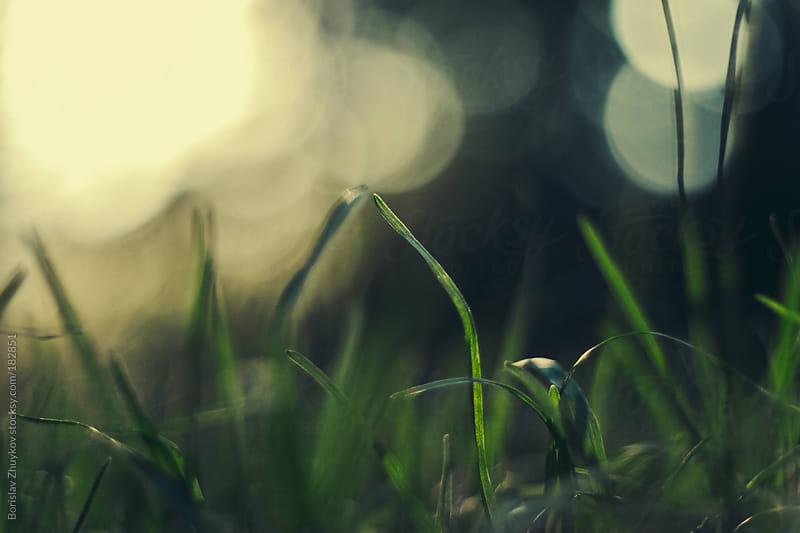 Close up of green grass  by Borislav Zhuykov for Stocksy United