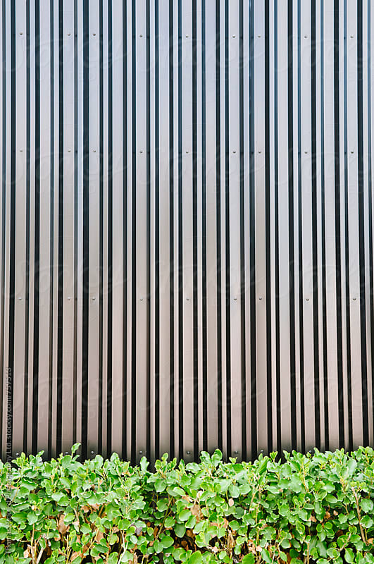 Green hedge against a black wall, Christchurch, New Zealand. by Thomas Pickard for Stocksy United