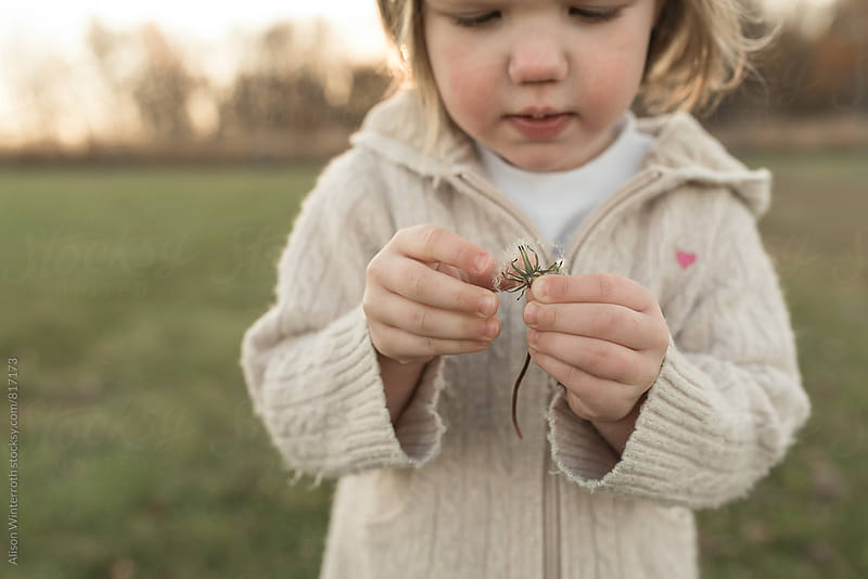A Toddler Pulls Apart A Dandelion by Alison Winterroth for Stocksy United