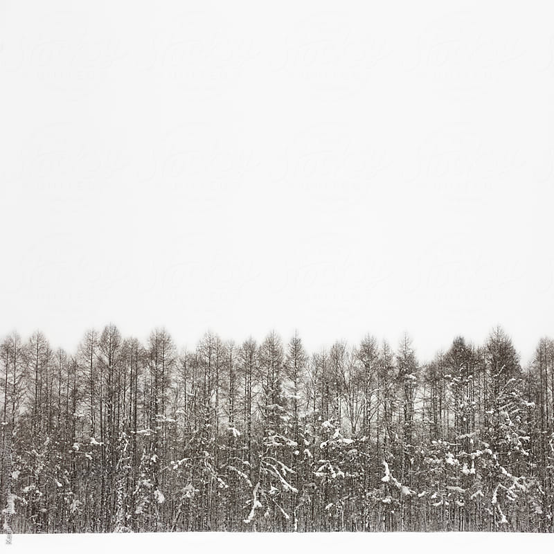 Snow Forest - Close by Kenny Smith for Stocksy United