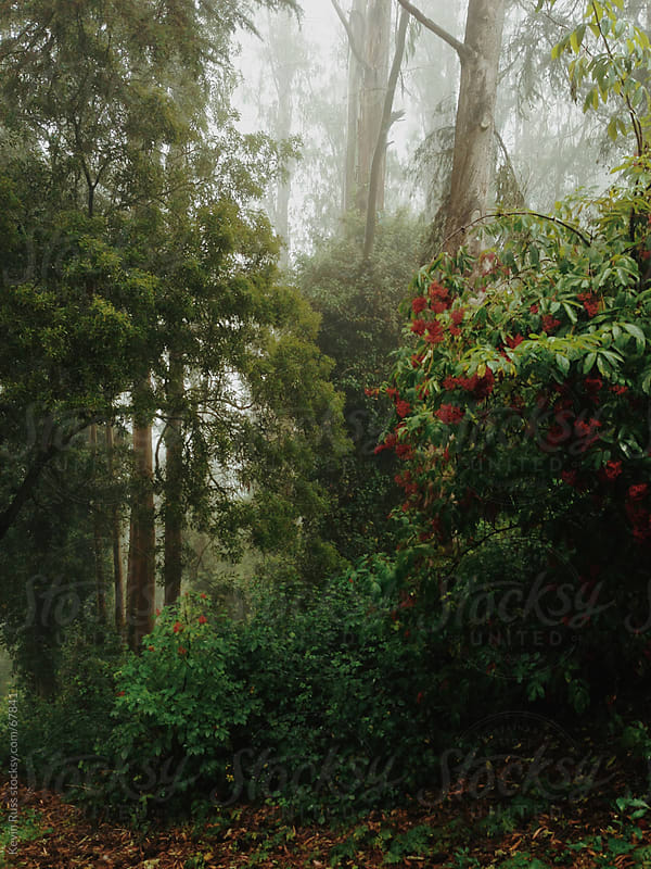 Foggy Forest Foliage  by Kevin Russ for Stocksy United