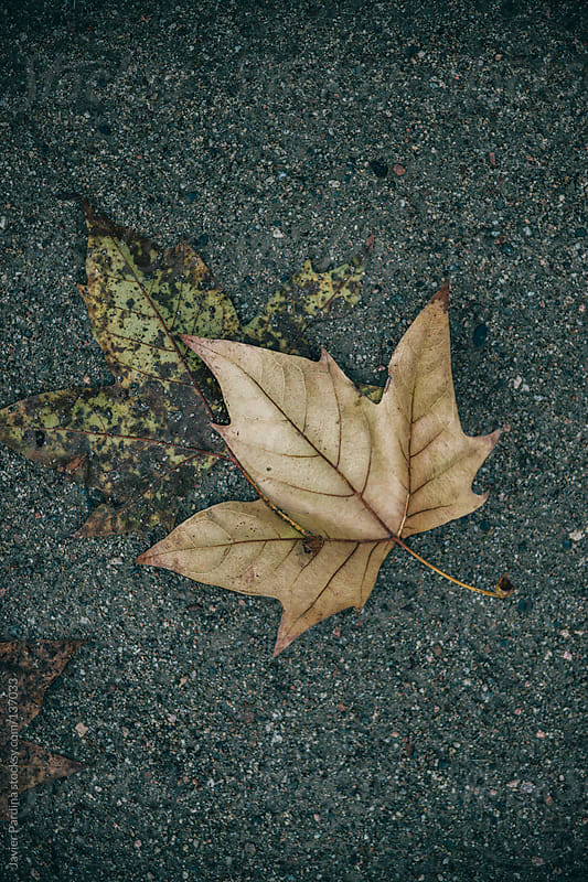 Fallen leaves on road in autumn by Javier Pardina for Stocksy United