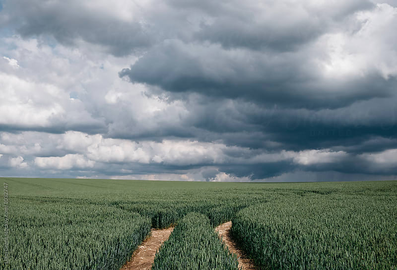 Rain storm clouds over a wheat field. Norfolk, UK. by Liam Grant for Stocksy United