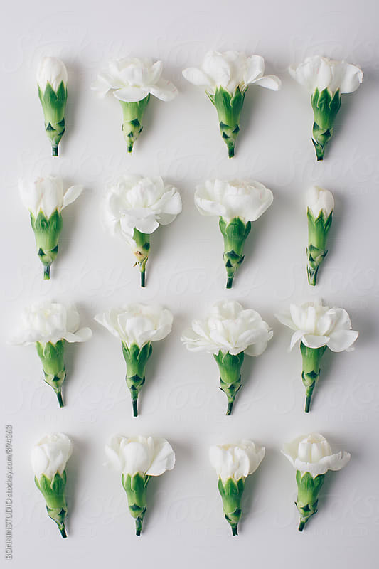 Overhead of white flowers in order. by BONNINSTUDIO for Stocksy United