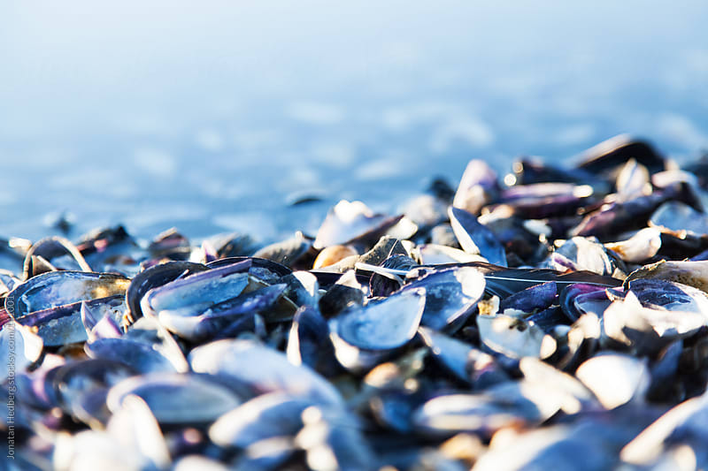 Covered with shells by Jonatan Hedberg for Stocksy United