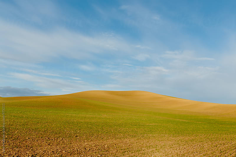 Greenish Yellow Wheat Field Hill Under Soft Blue Sky by Luke Mattson for Stocksy United