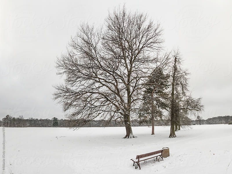 group of trees in a wintery park by Melanie Kintz for Stocksy United
