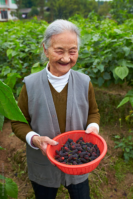 senior asian woman picking mulberry outdoor by cuiyan Liu for Stocksy United