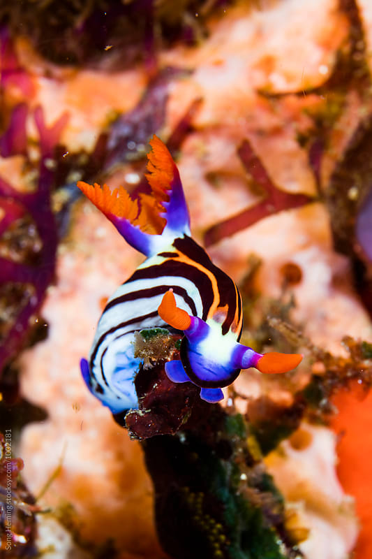 nudibranch by Song Heming for Stocksy United