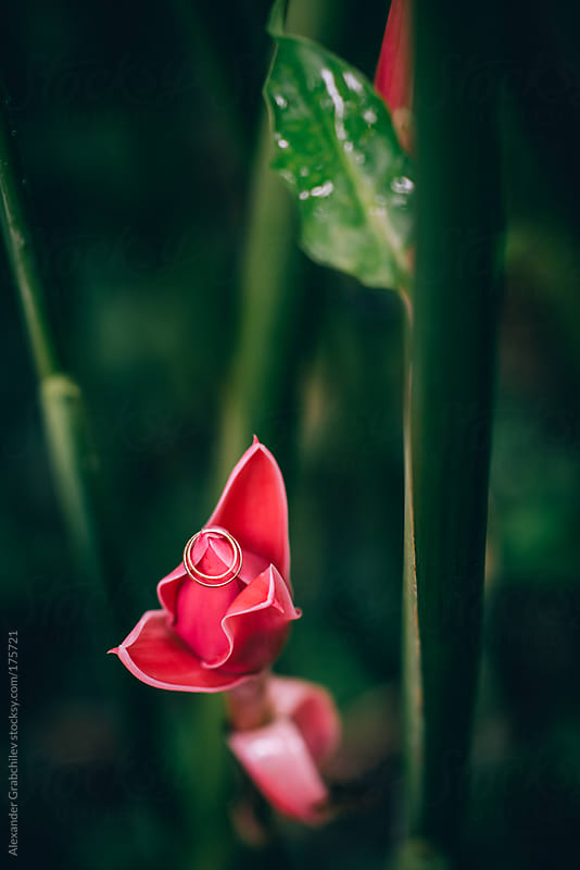 Wedding Rings in Red Tropical Flower by Alexander Grabchilev for Stocksy United