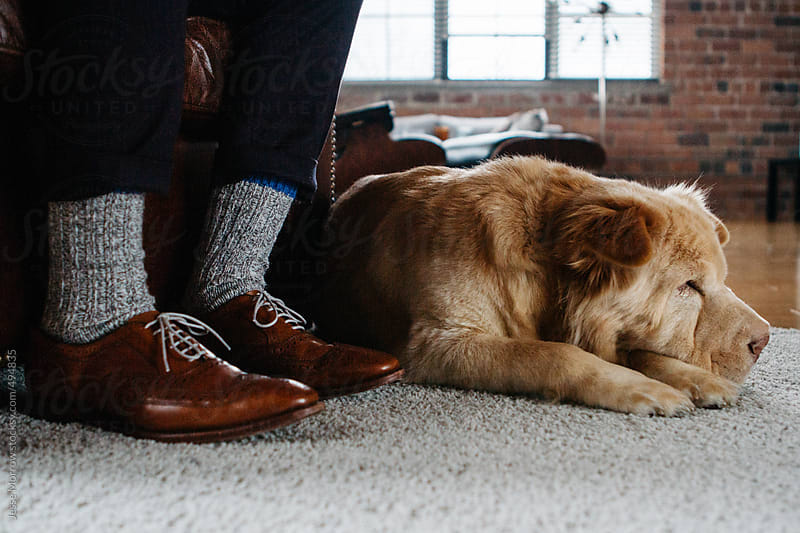 cute dog sleeps at owners feet by Jesse Morrow for Stocksy United