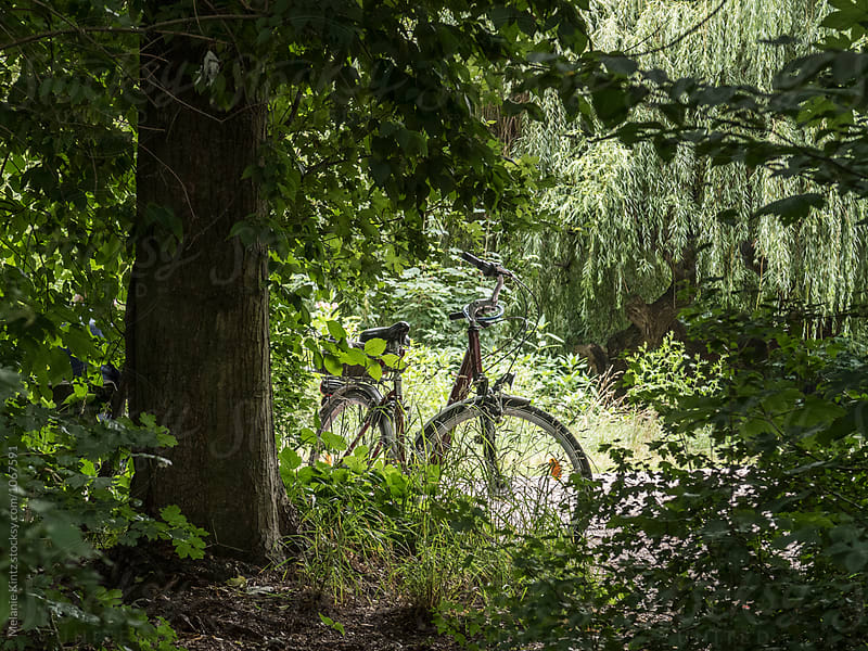 Bicycle parked in a forest by Melanie Kintz for Stocksy United