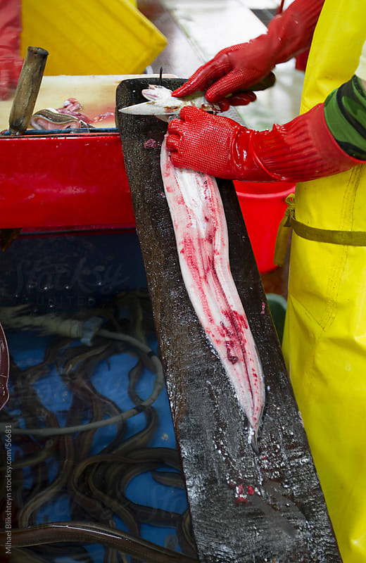 Live fish salesman filleting an eel at an Asian fish market by Mihael Blikshteyn for Stocksy United