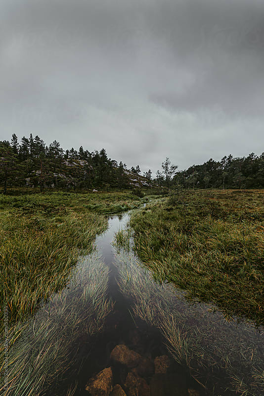 a creek winding through wetlands by Chris Zielecki for Stocksy United