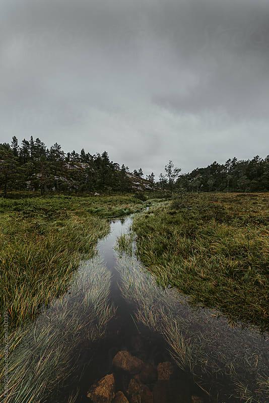 a creek winding through wetlands by Christian Zielecki for Stocksy United