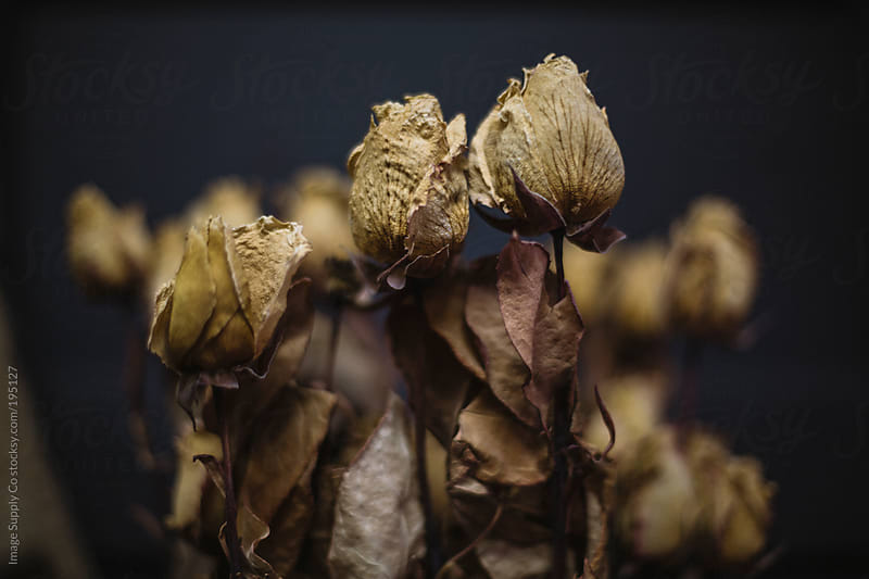 Bunch of dried flowers by Image Supply Co for Stocksy United